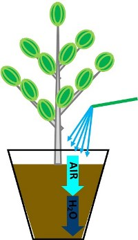 Water and air flow in potting soil