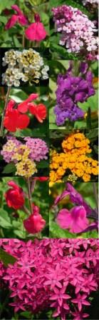 Excellent new pollinator plants for flower power all summer!