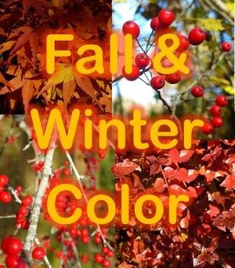 Great plants for color from fall through winter