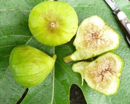 Lattarula Fig Italian Honey Blanche White Mille Lemon Fruits Herbs Almost Eden