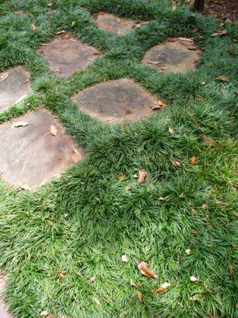 Dwarf Mondo Grass Dwarf Lilyturf Perennials Almost Eden