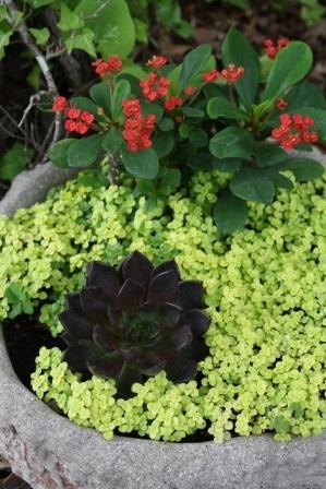 Succulent Mat