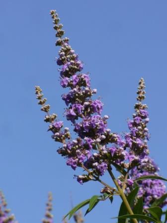 el pulpo es perjudicial para el acido urico que sintomas presenta el acido urico alto acido urico medicina homeopatica